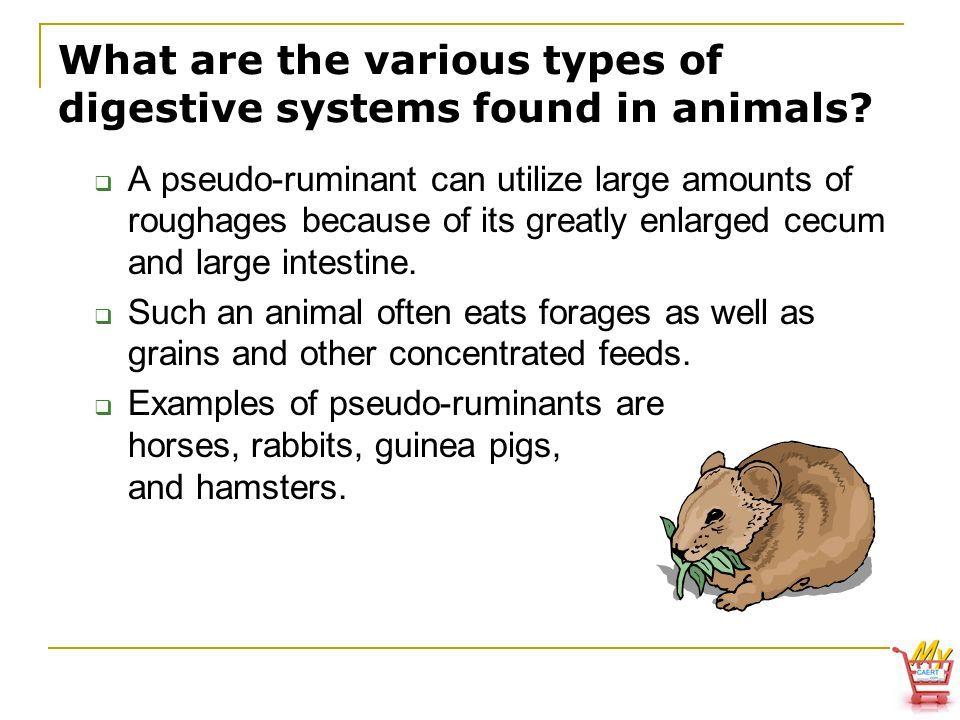 Image result for cecum animal | ASR Basic Anatomy & Physiology ...