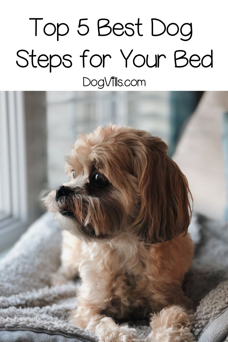Top 5 Best Dog Steps For Your Bed With Reviews Dog Steps Cool