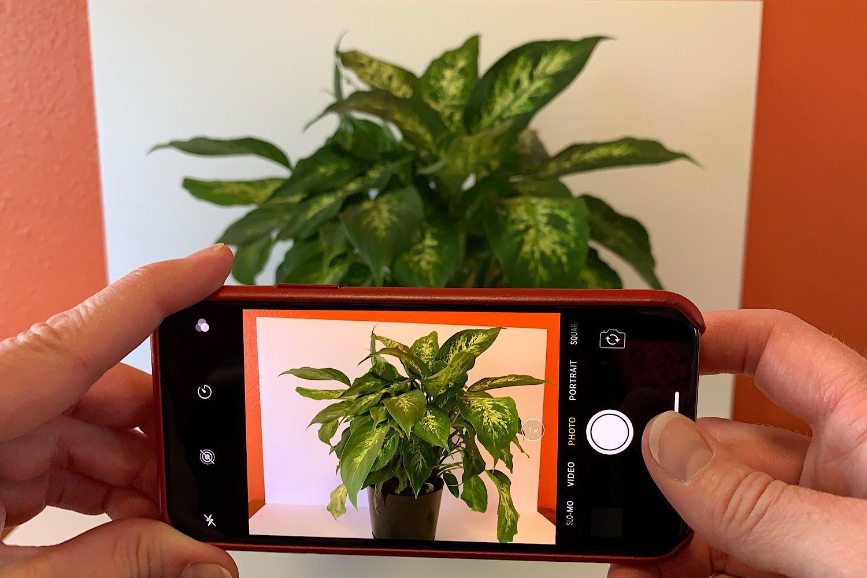 11 steps to help you take iphone photos like a pro
