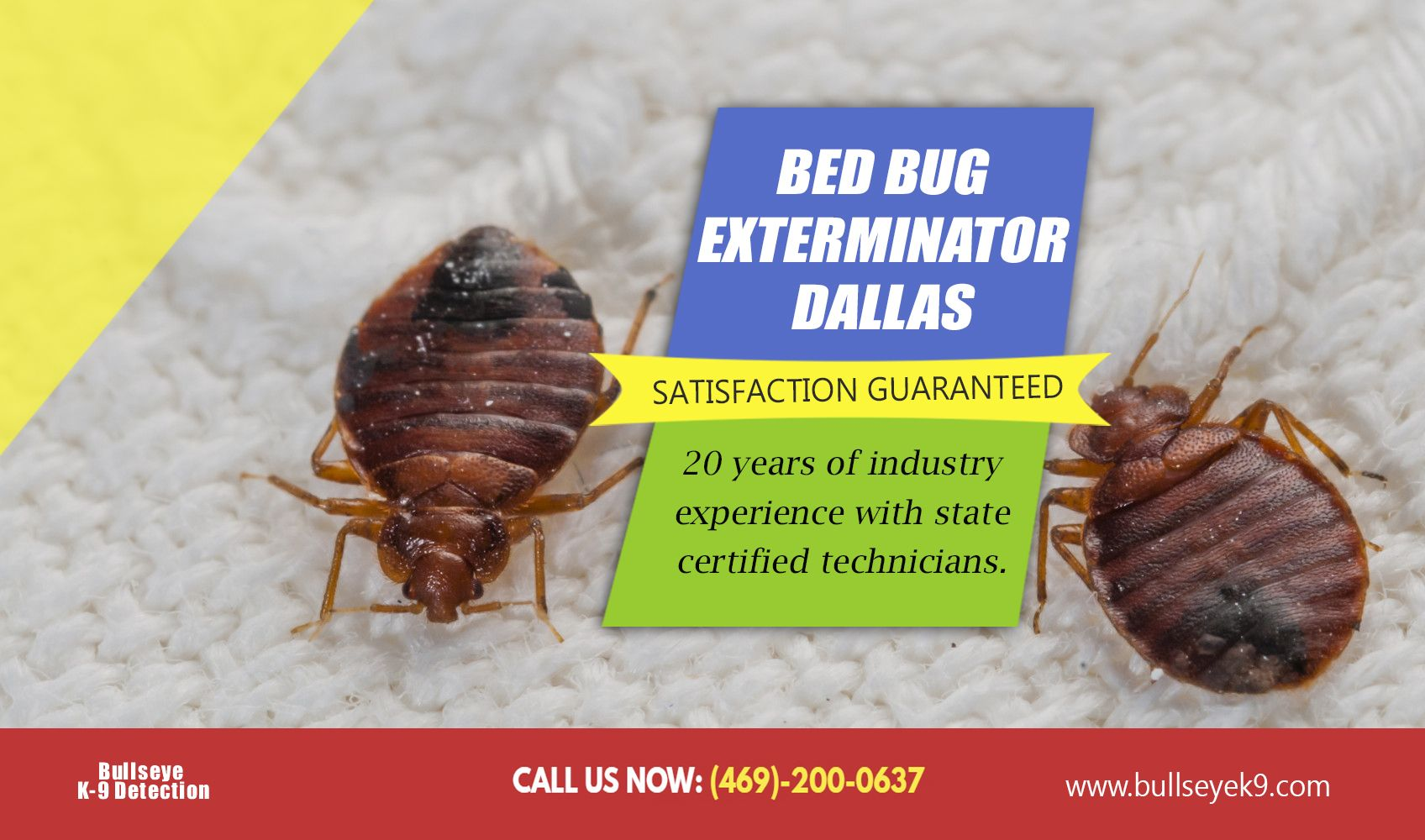 Bed bugs by bedbug removal on Bed Bug Detector Bed bug