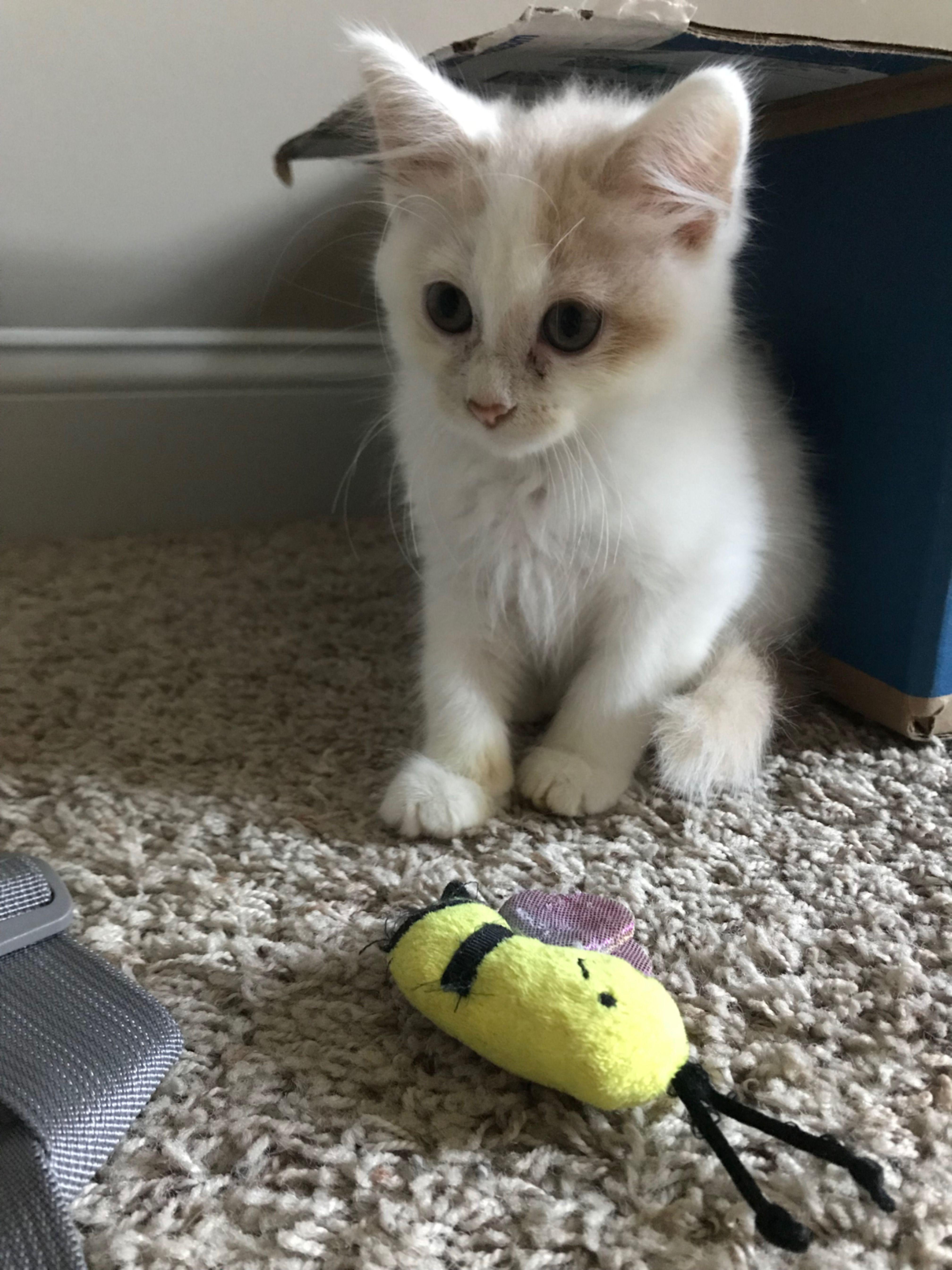Allerpet Cat Dander Remover 12 Oz Bottle Chewy Com Cat Dander Cat Allergies Cats