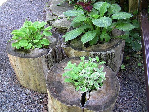 Logs cut from a tree used as plant pots
