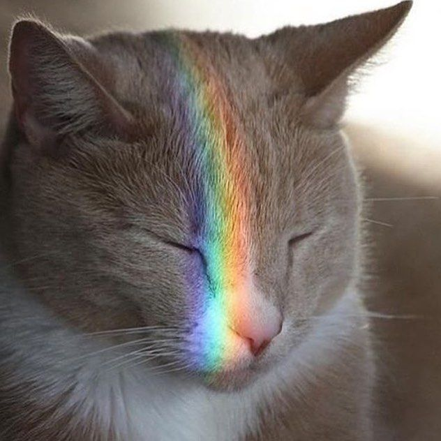Wednesday. No other reason needed to post a picture of a rainbow cat.   via @graceisacuriousthing #offenstore #rainbow #catsofinstagram #catlover #catstagram
