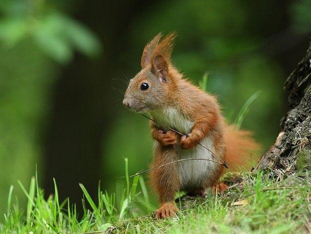 Муми, картинки лесных животных смешные