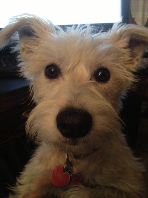 Good Floppy Ears Brown Adorable Dog - 4695f07f1b98181a0e7fb7eb87cf4c5c  HD_662640  .jpg