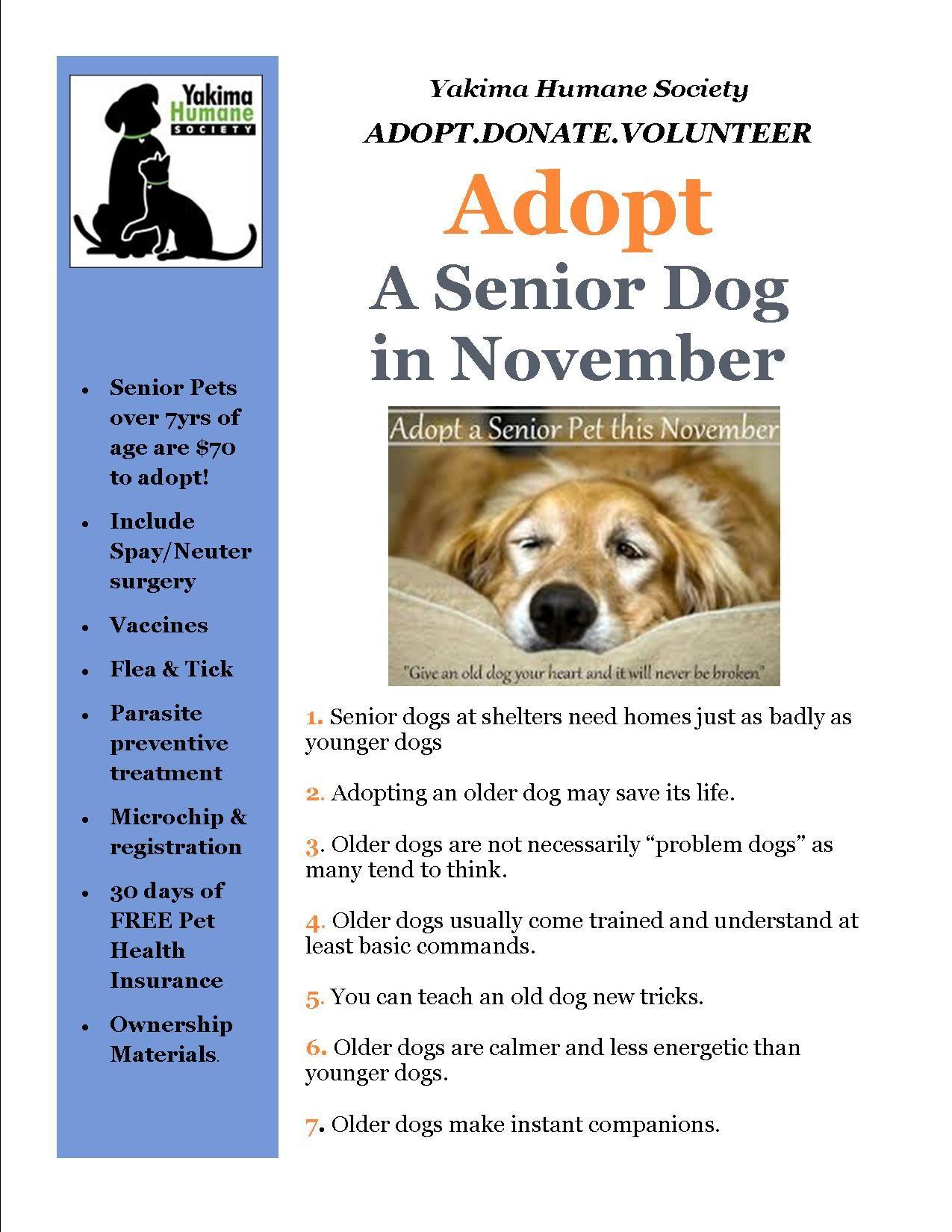 Adopt A Senior Dog Or Cat At The Yakima Humane Society Senior