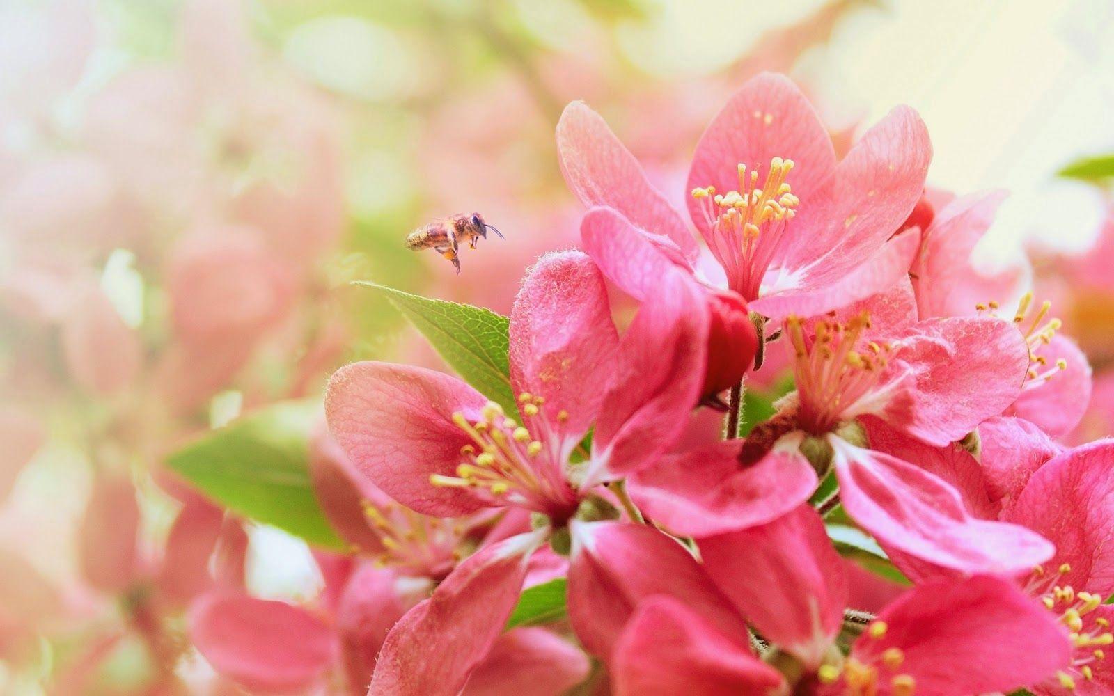 Most Beautiful Flower Wallpapers World Beautiful flowers
