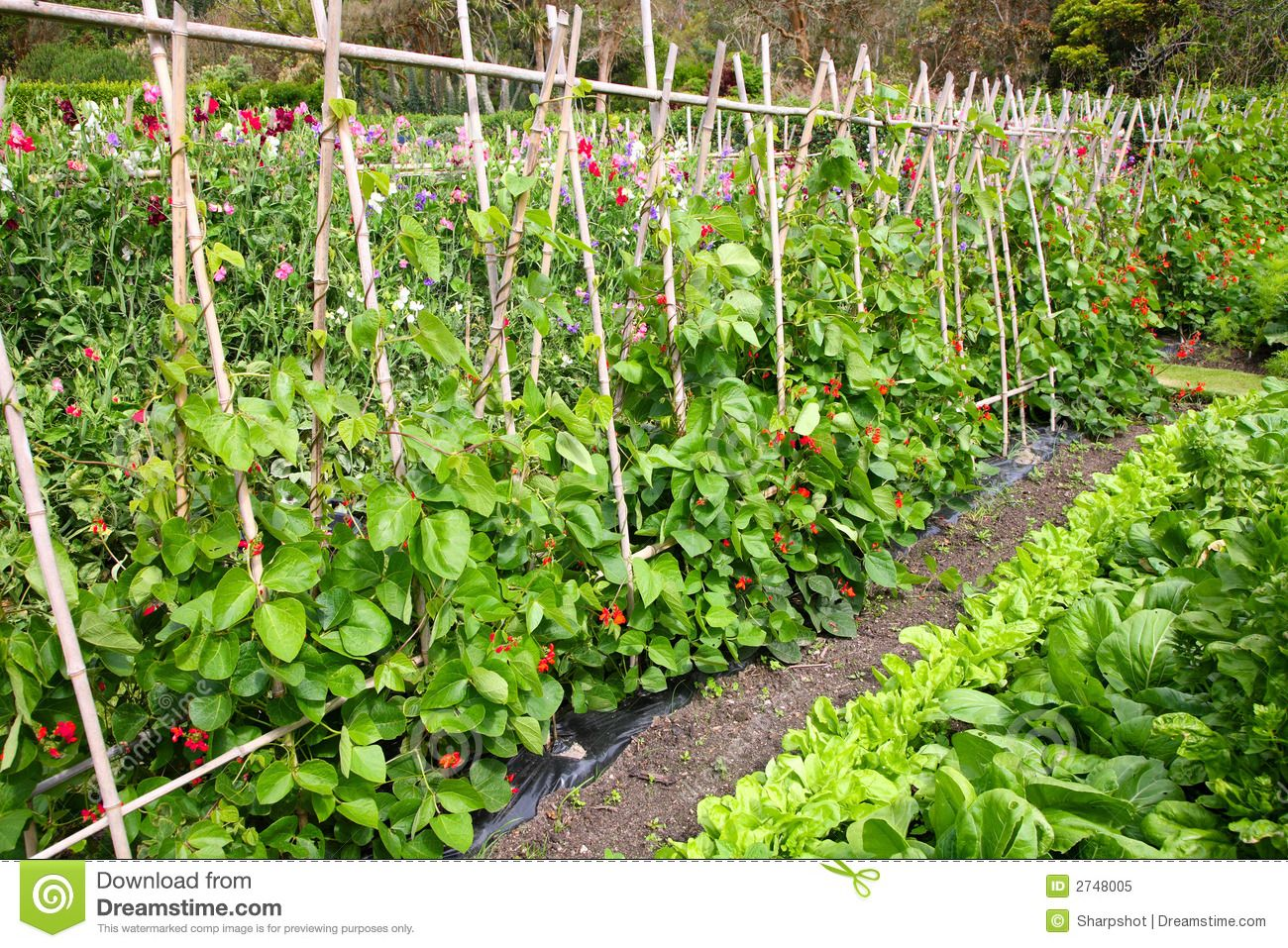 A Vegetable Garden Royalty Free Stock Photo