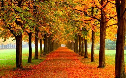 Nature Leaf Id 46465 Autumn Leaves Wallpaper Phone