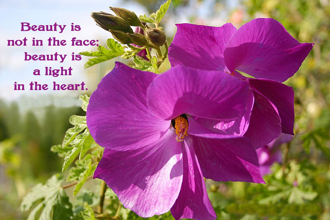 Beauty Is Not In The Face Beauty Is A Light In The Heart Flower