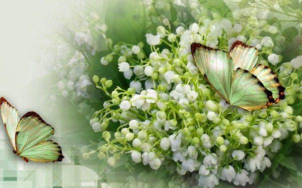 bon 1er mai un bouquet porte bonheur pour toutes et tous divers pinterest muguet 1er mai. Black Bedroom Furniture Sets. Home Design Ideas