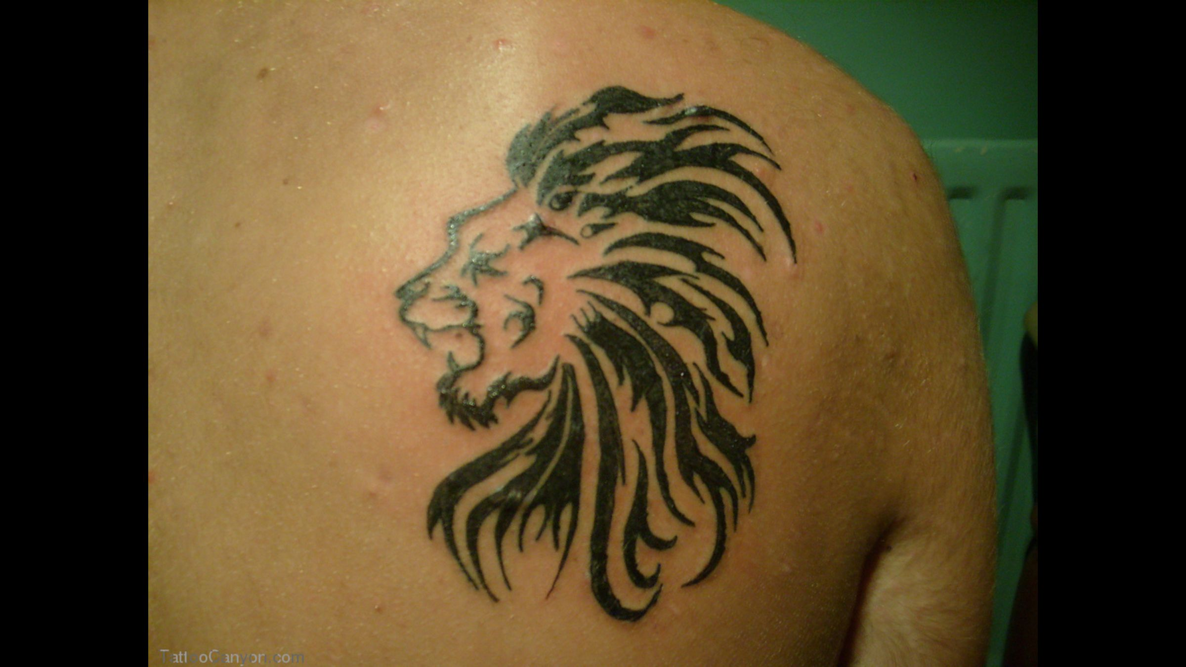 Rasta Lion Tattoo On Side Lion Tattoo Designs Collection Tribal Lion Tattoo Lion Tattoo Small Lion Tattoo