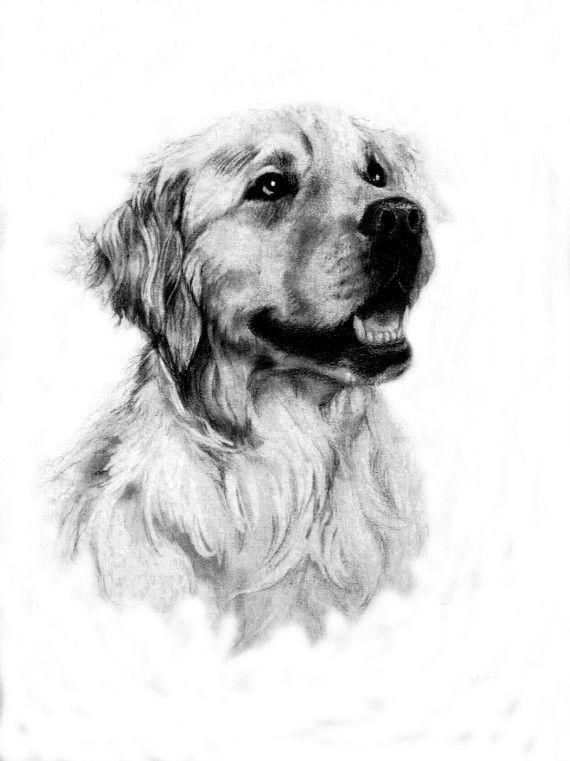 Golden retriever portrait 1 art my originals and prints for sale dessin chien image chien - Dessin golden retriever ...