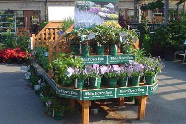 White Flower Farm The premier American source for plants shrubs bulbs and gardening supplies delivered from our nursery to your home