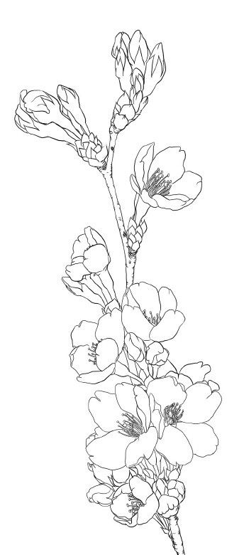 Designer Flower Drawing Design Flower Drawing Drawings