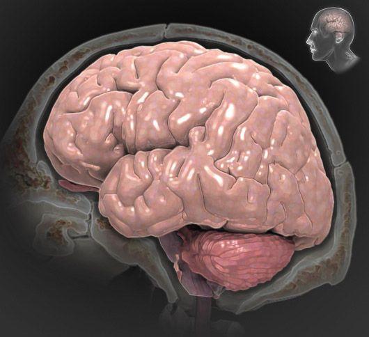 Traumatic Brain Injury A to Z - Interactive Brain | counseling idea ...