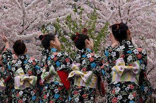 Japanese Cherry Blossom Festival Hanami Japan Cherry Blossom Festival Cherry Blossom Festival Japanese Festival