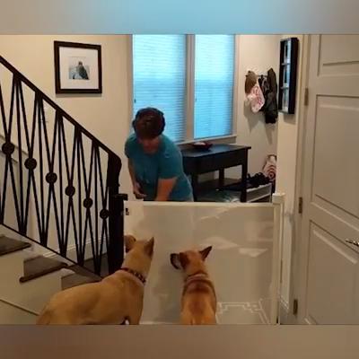 Magic Pet Gate Safe Guard Video Video In 2020 Pet Gate Diy Home Improvement Home Gadgets