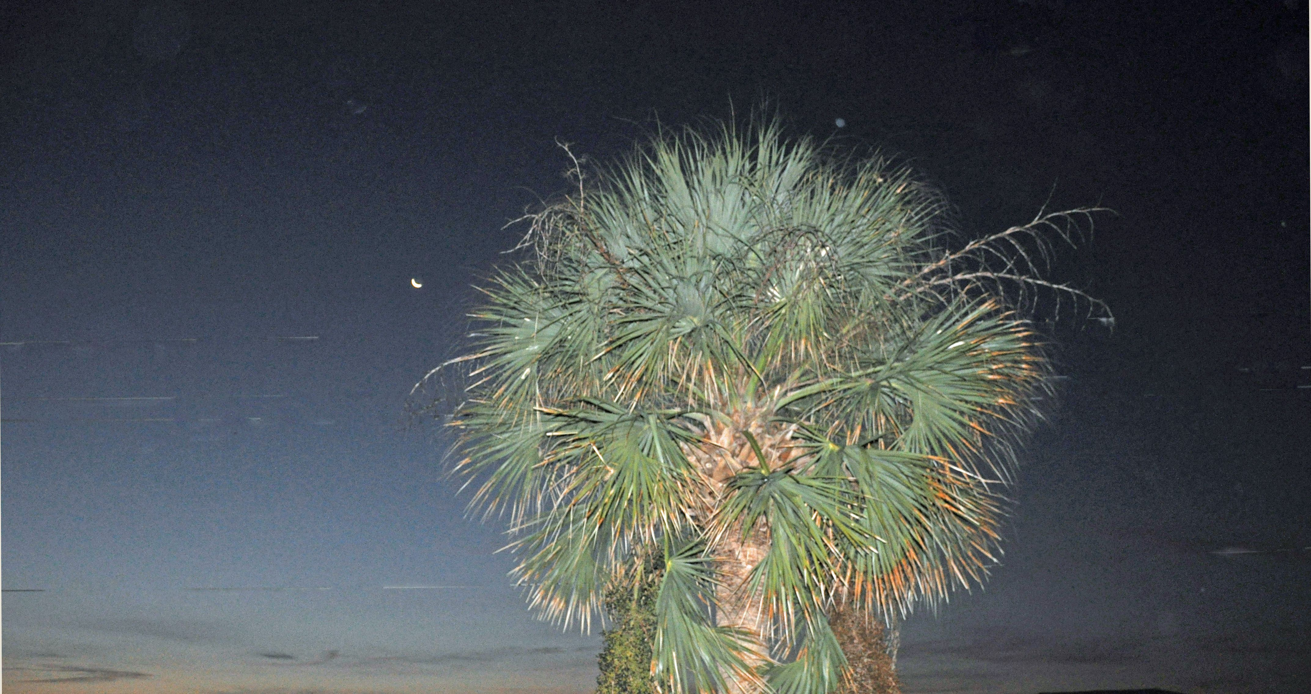 Palmetto and Crescent Moon on Palmetto at Edisto Beach, SC