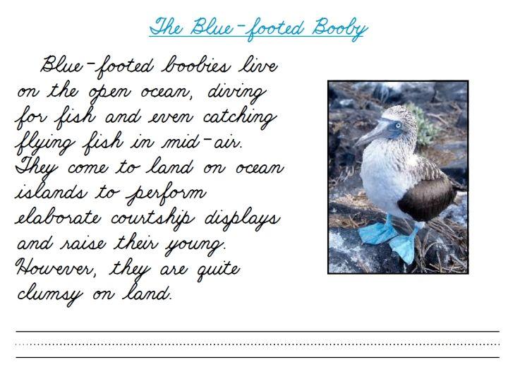 fran 39 s freebies seabird cursive school cursive handwriting practice cursive cursive. Black Bedroom Furniture Sets. Home Design Ideas