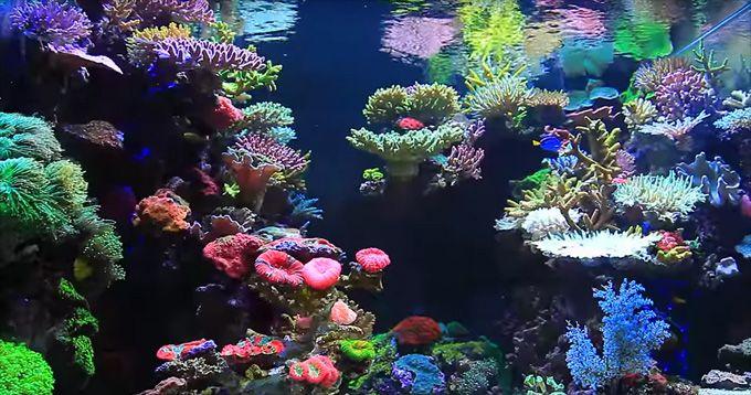 Aquariums · Jaw Dropping Korean Reef Aquascape