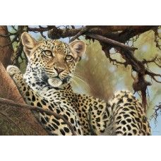 Pip McGarry - Leopard Lookout
