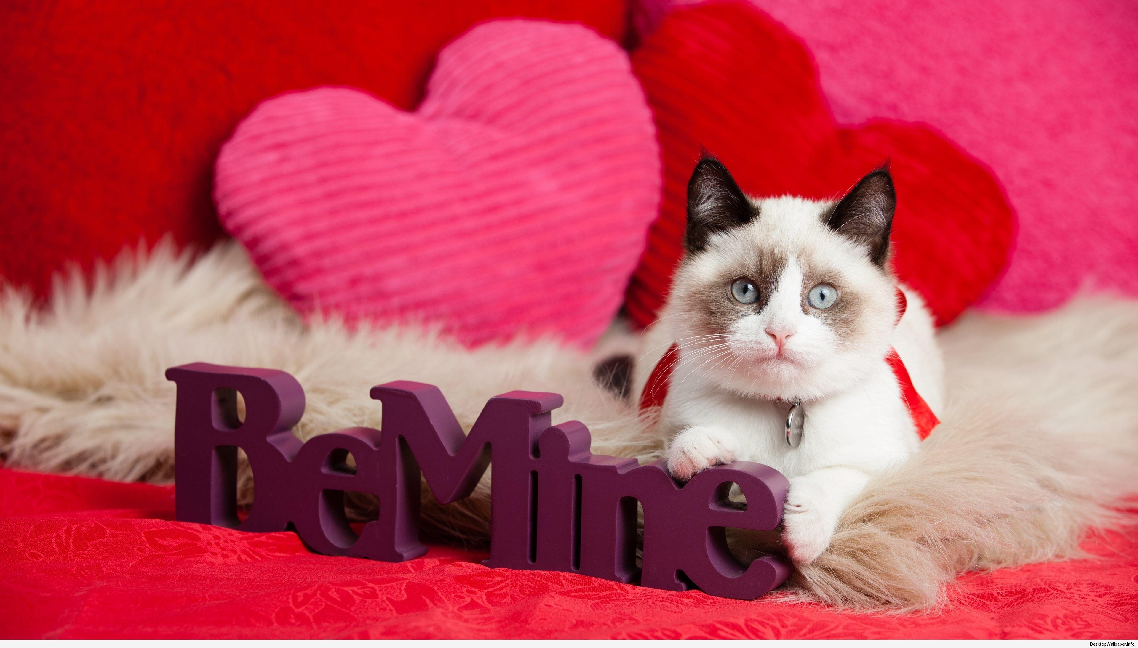 Valentine Kitten Wallpaper Http Desktopwallpaper Info Valentine Kitten Wallpaper 5368 Kitten Valen Animal Valentine Valentines Day Cat Kitten Wallpaper