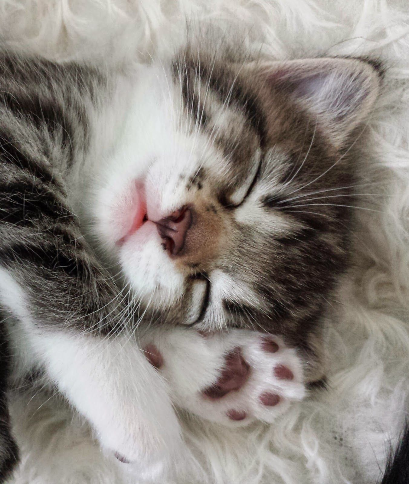 I must follow this kitty's example - Nighty-night.