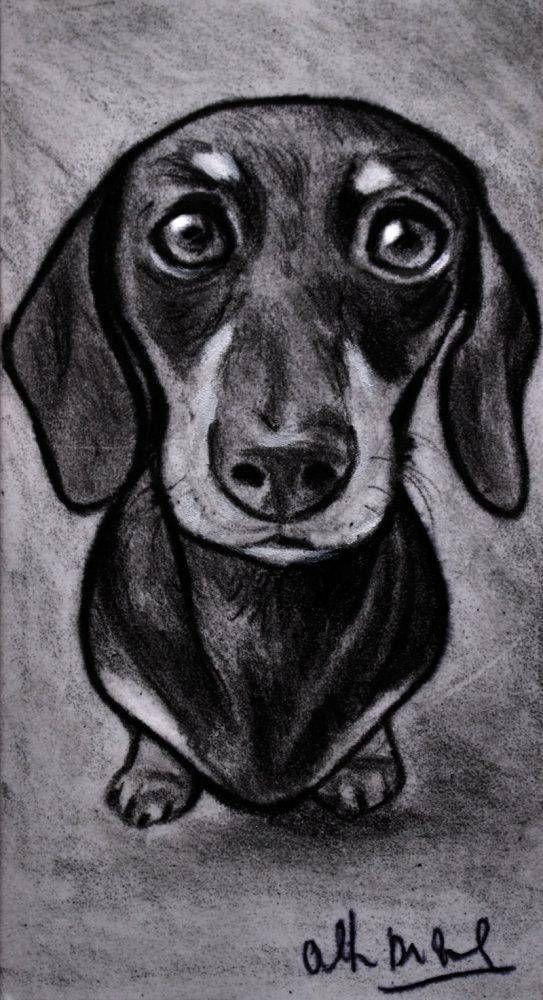 Dachshund dog drawing sketch portrait pencil magoo em 2019 disegni disegno ritratti e for Disegni di cavalli a matita