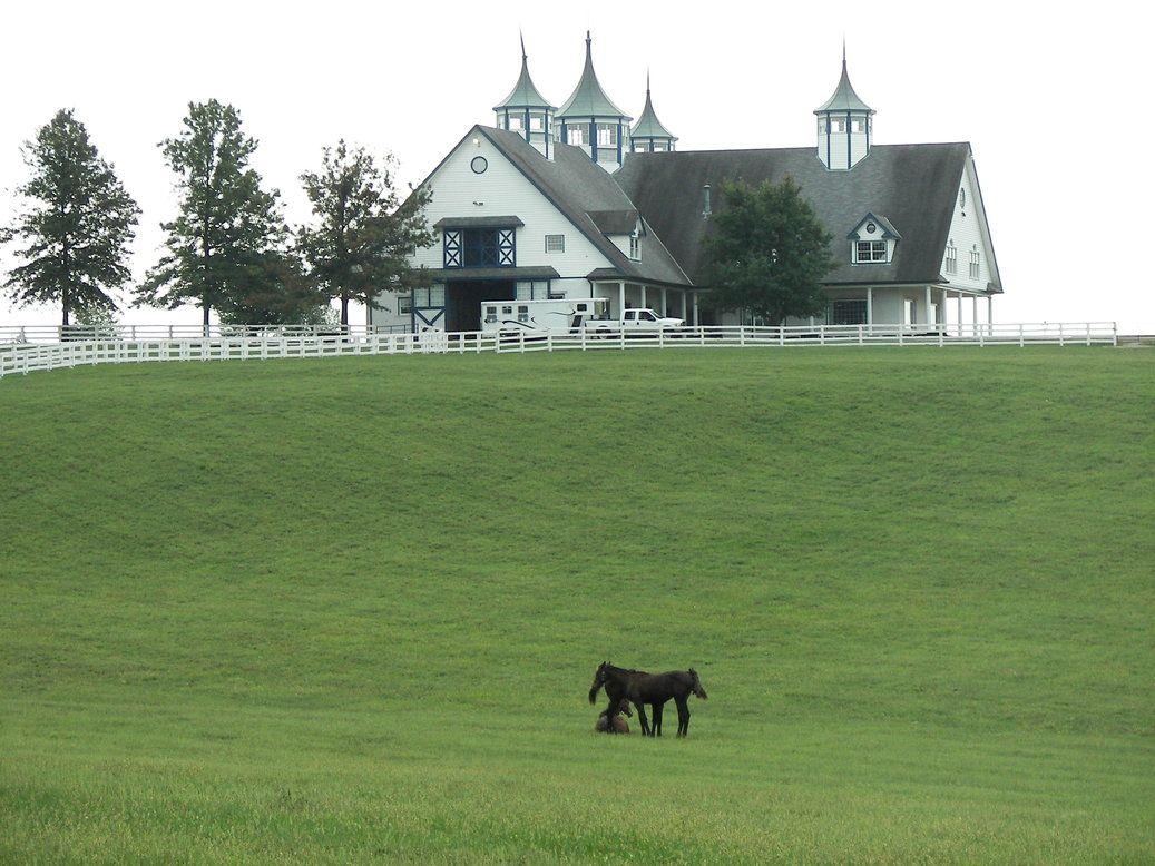 Image gallery lexington kentucky horse farms for Horse farm