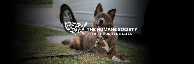 Humane Society Of The United States Landscape Humane Society Society Human