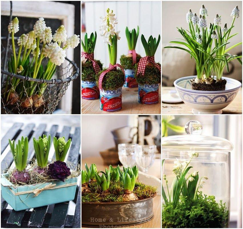 Diy Niebanalne Kompozycje Z Wiosennych Kwiatow Plants Art Display Inspiration