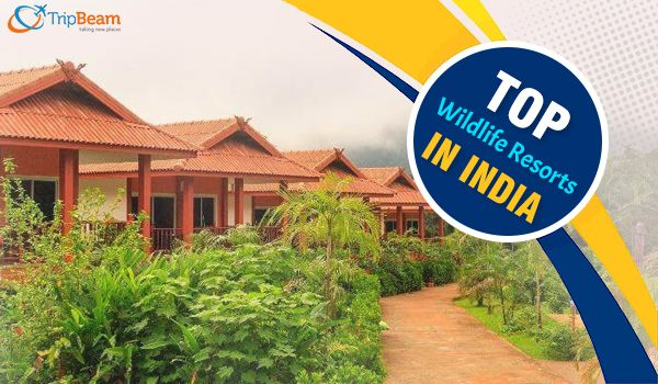 If you are a wildlife lover, then don't miss a chance of #exploringwildlife beautifully and more comfortably. Book #cheapflights to #India online from our website and visit all these wildlife resorts and forest lodges that are mentioned in the blog of #TripBeam.