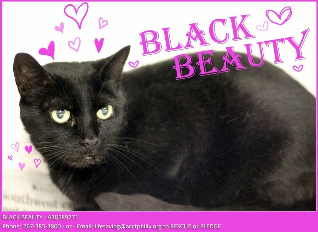 Lovely BLACK BEAUTY needs our help! She was dumped in ACCT
