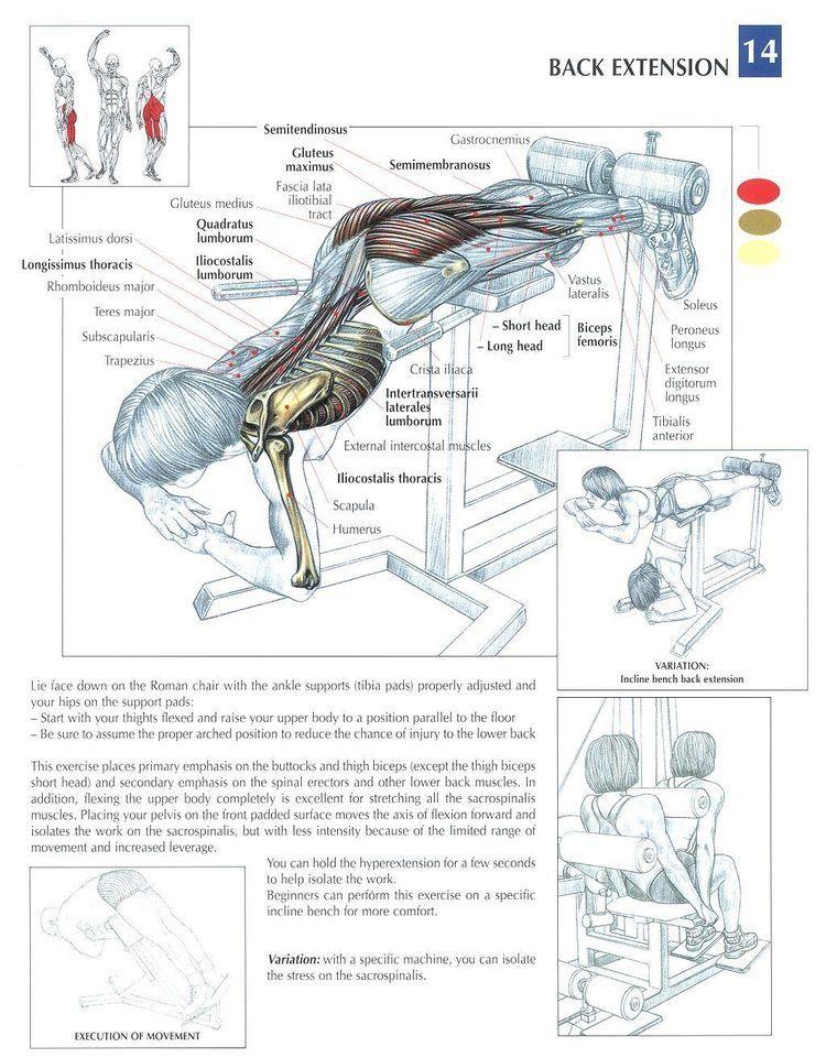 Pin by Sherri Jones Morrow on Real life Fitness body