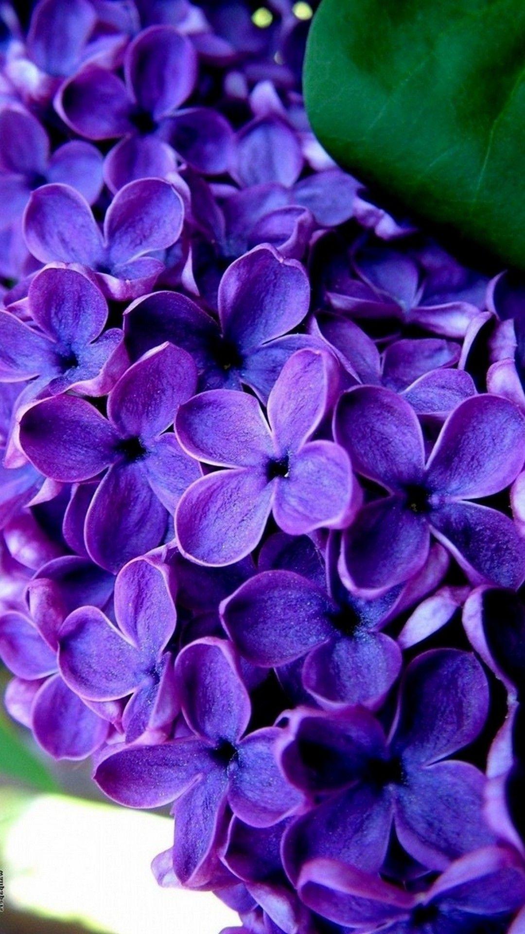 Purple Flowers Mobile Wallpaper Hd Best Hd Wallpapers Heart