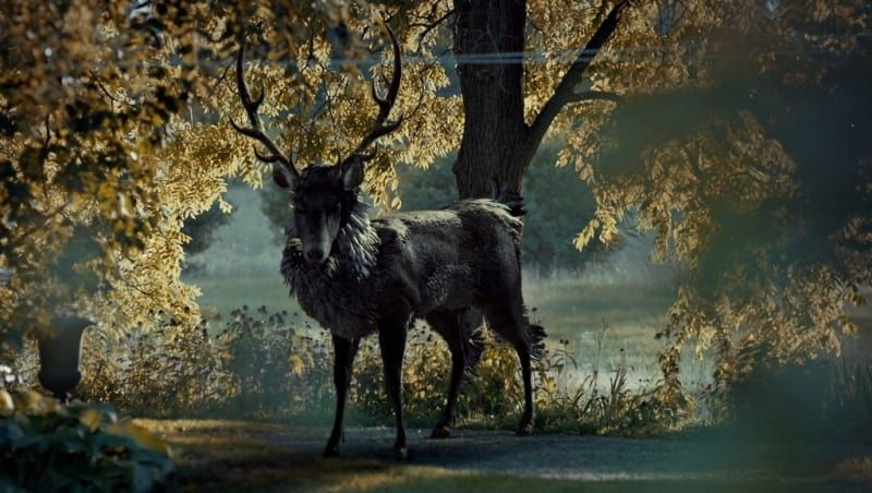 "The stag — or Ravenstag, as some fans call it — appears to Will in his dreams, particularly after he kills Garrett Jacob Hobbs. But what does it mean?Theory: The stag symbolizes evil. Whether it's an actual person or just a feeling Will gets, it appears as a manifestation of one of Will's hunches. It can guide him toward the evil, or clue him in to something important.Evidence: In ""Entree,"" Will notices a deer sculpture in Hannibal's office and touches it. This isn't lost on Hannibal, which…"