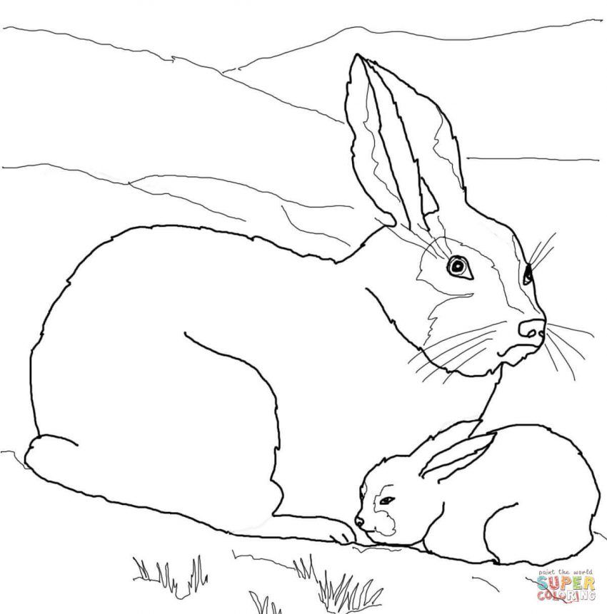 mama and baby animal coloring pages Arctic hare, Polar