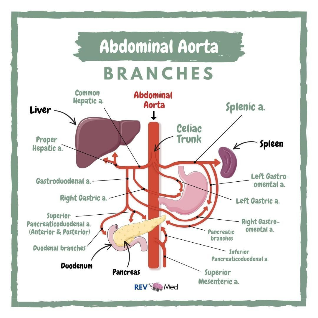 Which Of The Following Arteries Is The Most Common Site