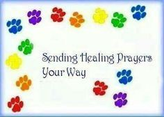 Sending Healing Prayers Your Way Sending Prayers Prayers For Healing Sick Pets