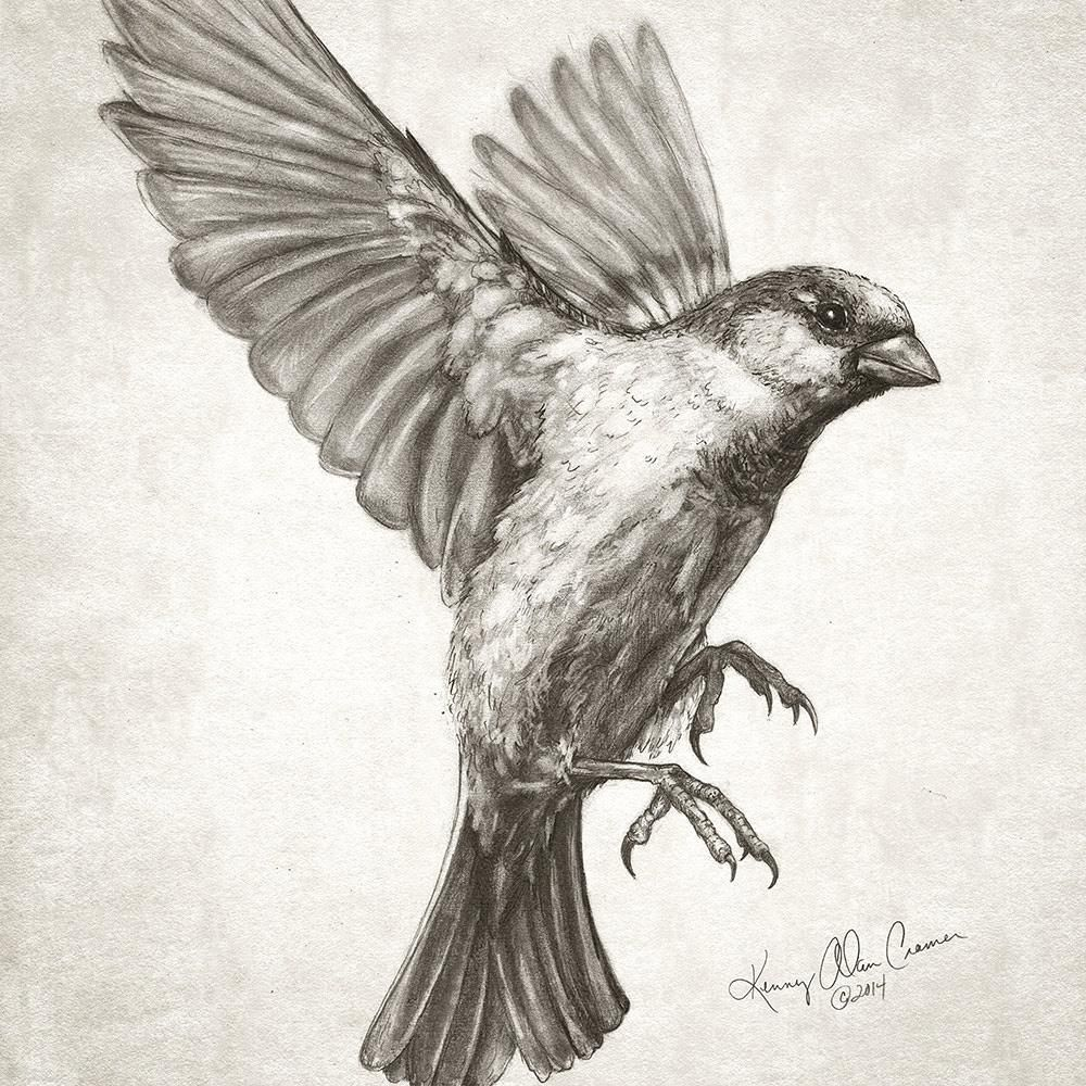 caitlinroseillustration | Please send all enquiries to ...