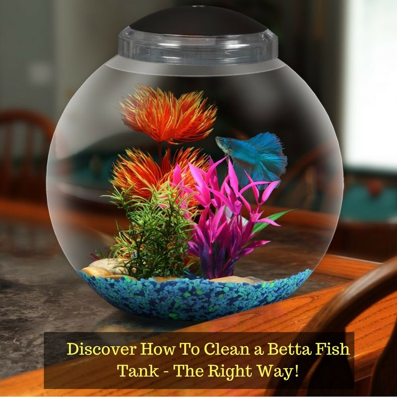 How to clean a betta fish tank betta fish tank fish for How do you clean a fish tank