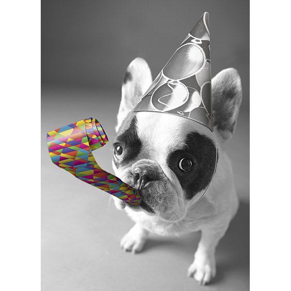 Happy Birthday French Bulldog Happy Birthday French Bulldog Bulldog Happy Birthday Bulldog
