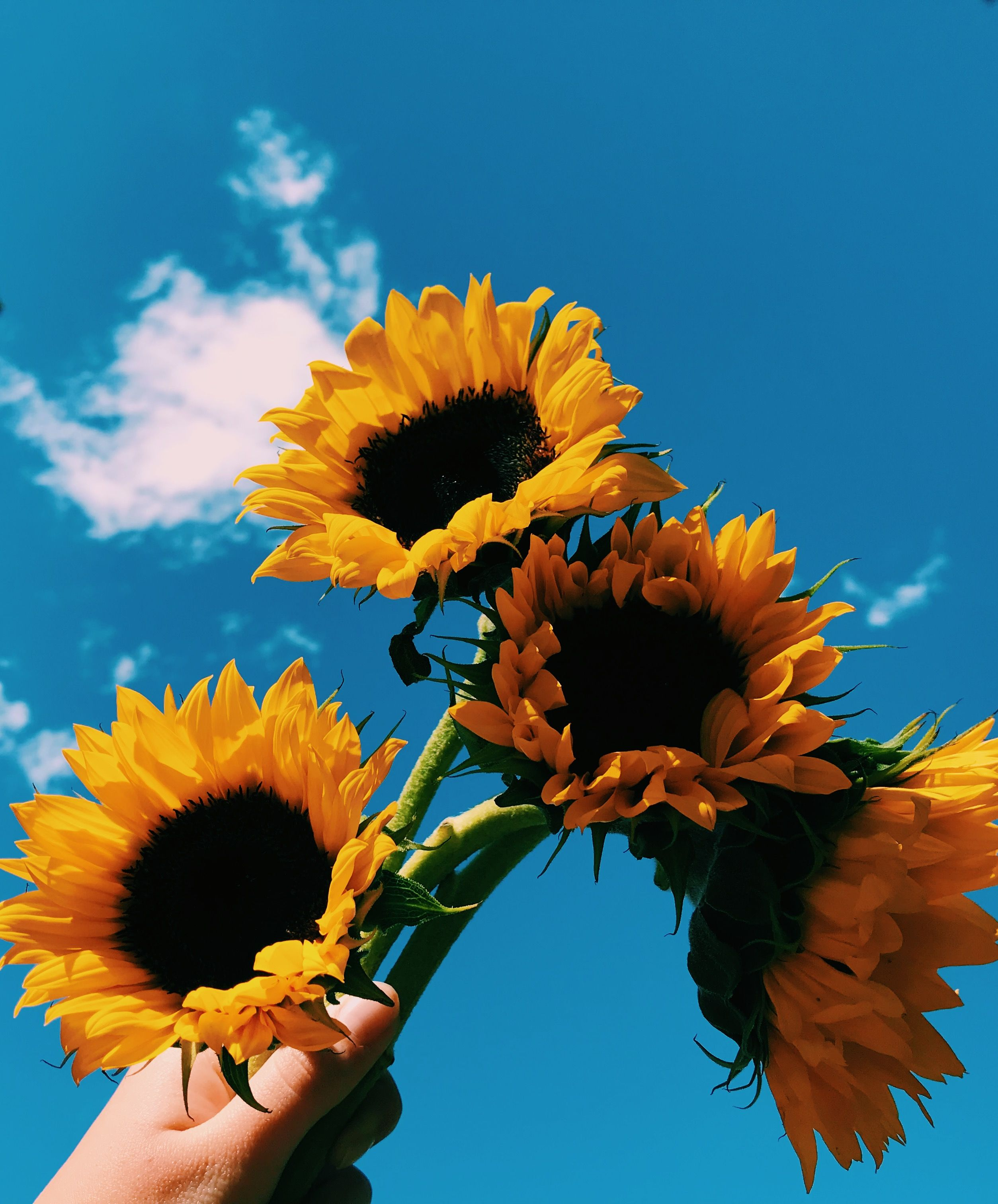 🖤 Aesthetic Sunflower Profile Pictures - 2021