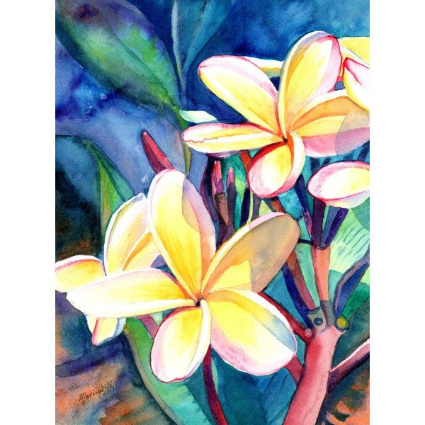 Plumeria Watercolors Tropical Flowers Frangipani Art Kauai Fine 125 Liked On Polyvore Featuring Home Flower Art Flower Painting Watercolor Flowers
