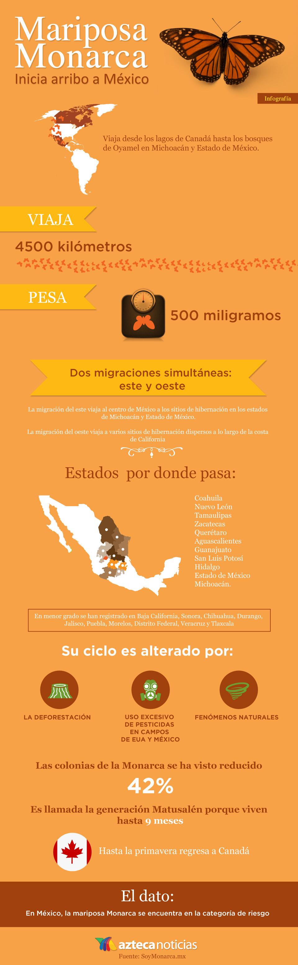 Mariposa monarca - Infografia - www | Pinterest | Mariposa monarca ...