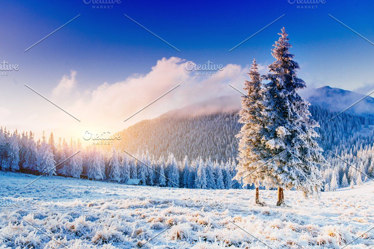 Mountains Snow And Fir Tree Forest Winter Landscape Winter Trees Winter Backdrops Sunset forest snow winter spruce trees