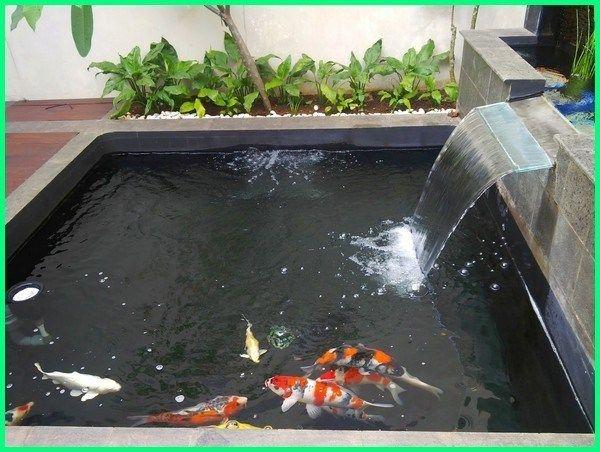 Kolam Ikan Koi Sederhana Murah Infoakuakultur Com