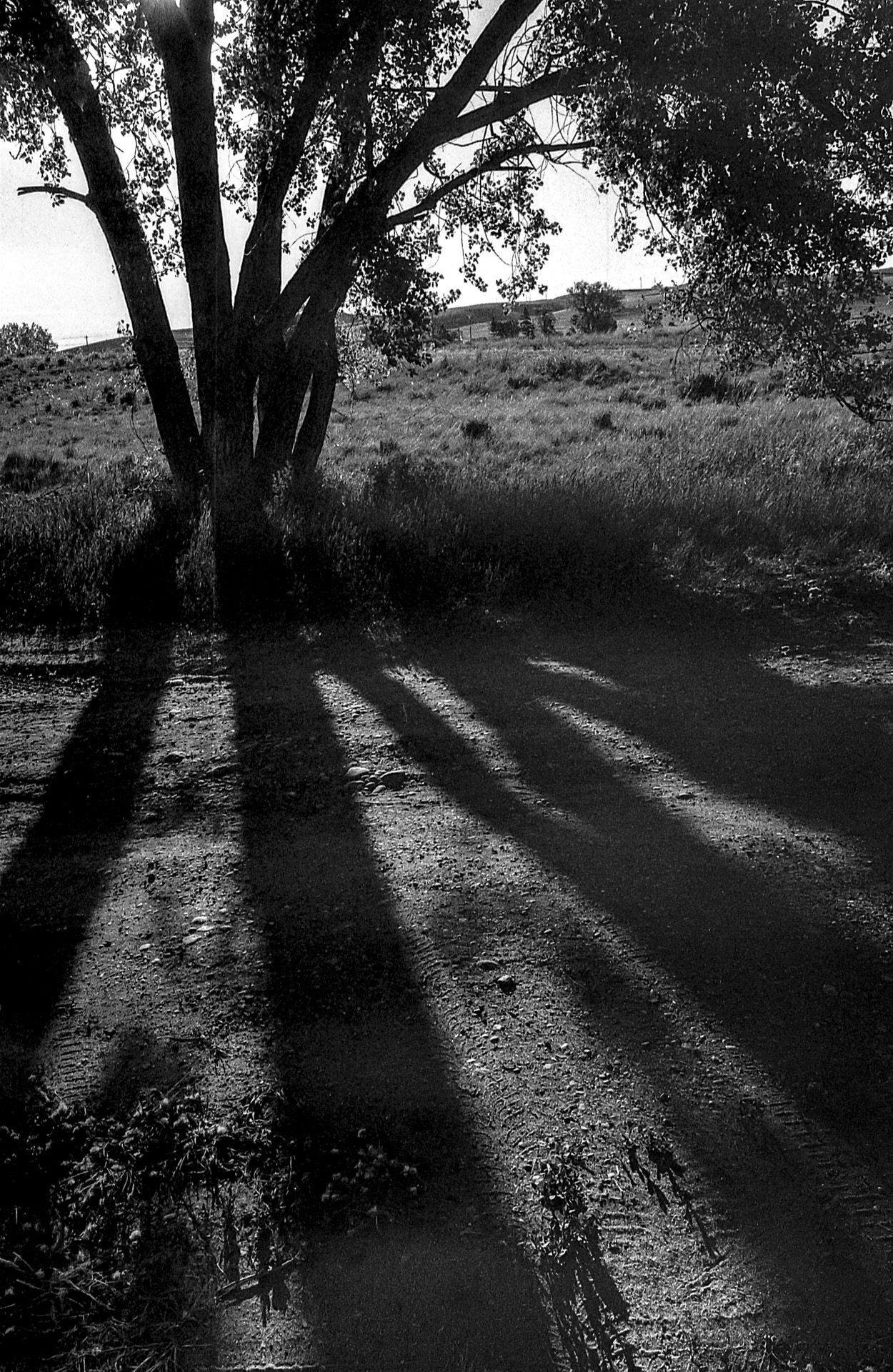 Shadows dust ii 135 film photography black white blair boyd photography blairboyd com
