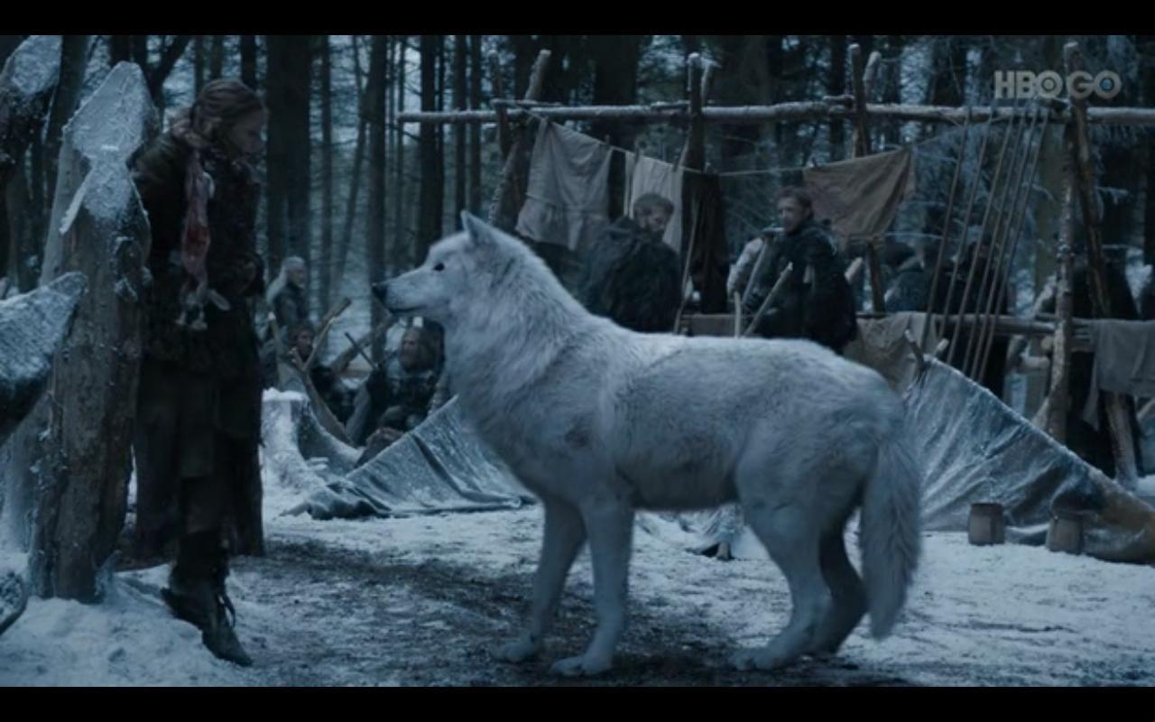 Jon Snow S Direwolf Ghost Game Of Thrones Facebook Game Of